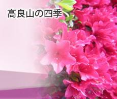 banner_hanagoyomi01